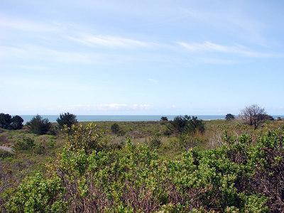 Ano Nuevo State Reserve  (N. elephant seals habitat)