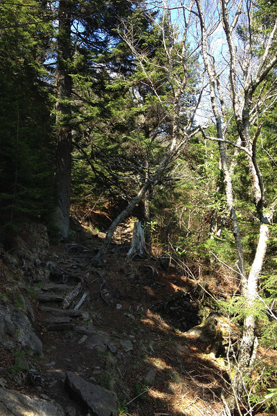 Mount Mitchell Trail - 5,950'
