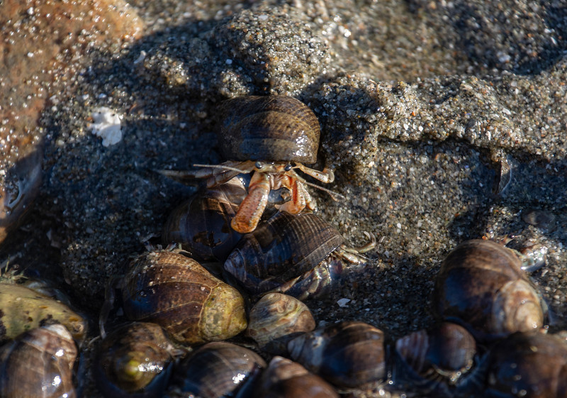 Hermit-crabs-beach.jpg