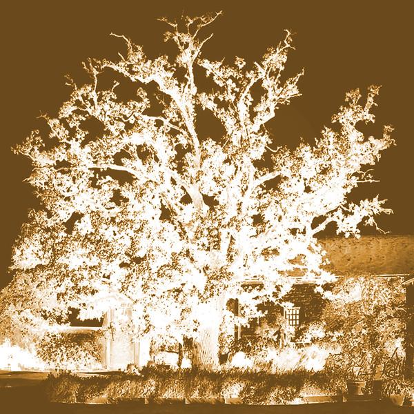 Tree at Chat. Roche Jagu~0123-6sq.