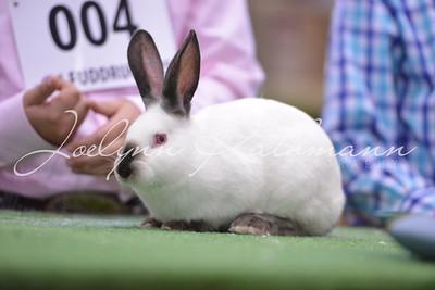 Rabbit Ringshots