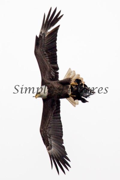Eagle 32546