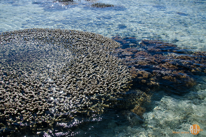 Australia-queensland-Lady Elliot Island-6160.jpg