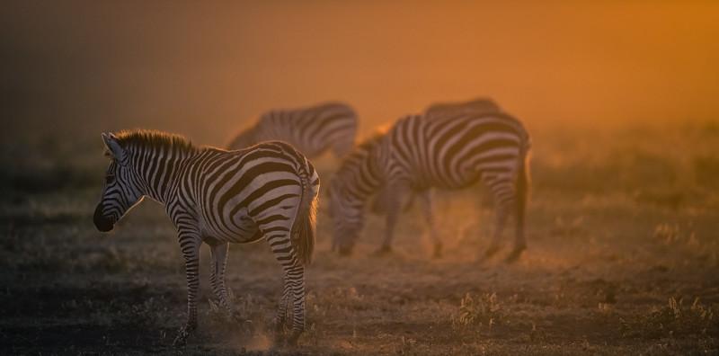 Tanzania_Feb_2018-309.jpg