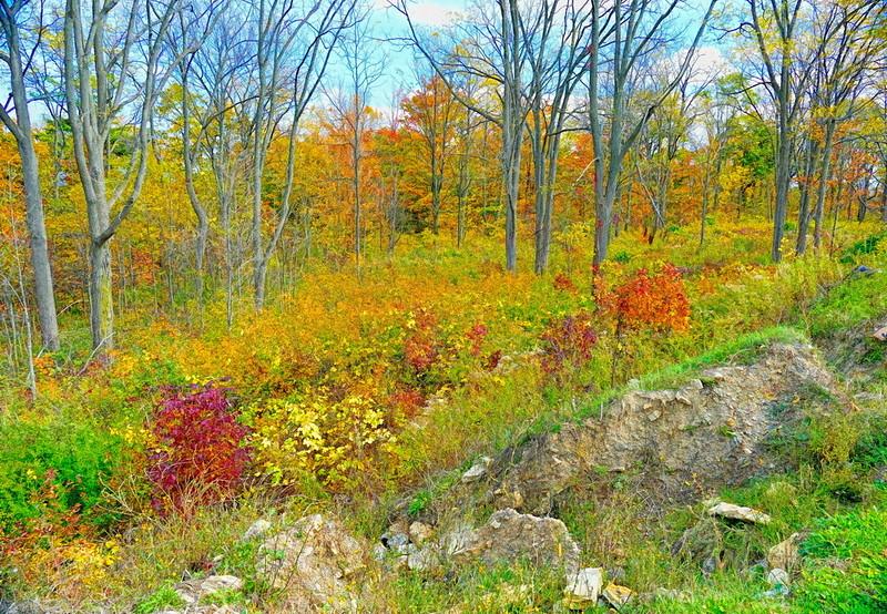 Escarpment Landscape Simp.jpg