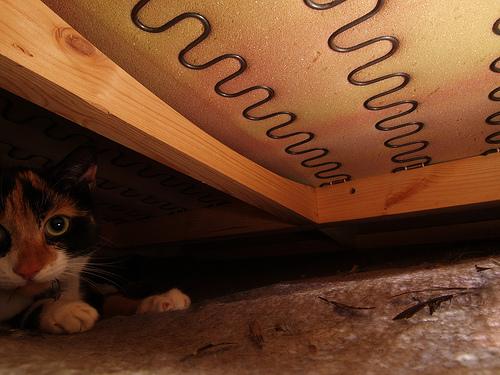 Den  Under the sofa: the hidden world of Fran Kitten