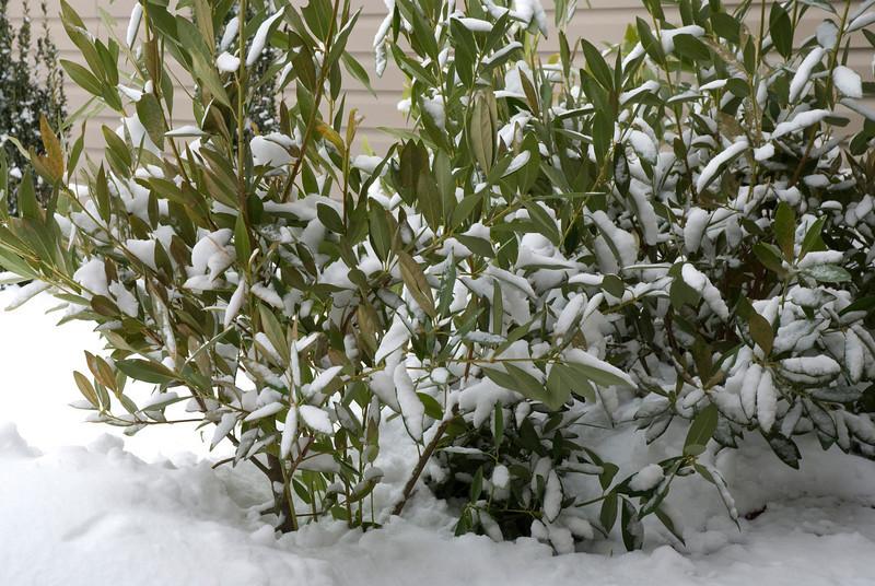SnowFeb13-3.jpg