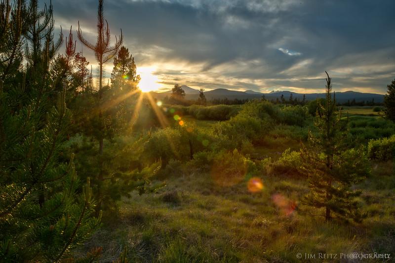 Sunbeams and pines - at Sunriver, Oregon