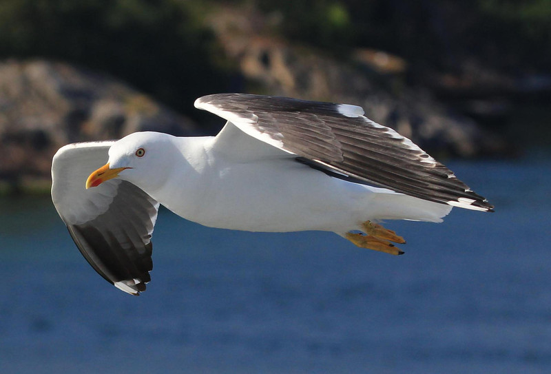 A gull flying right by our sun deck as we leave Bergen.