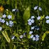 Kevät, Spring