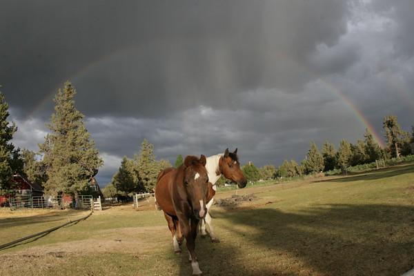 michal's horses
