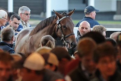 Tattersalls Book 1 - Wednesday October 10