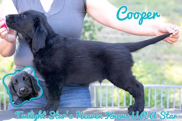 """Twilight Star's Heaven Knows U R A Star """"Cooper"""""""