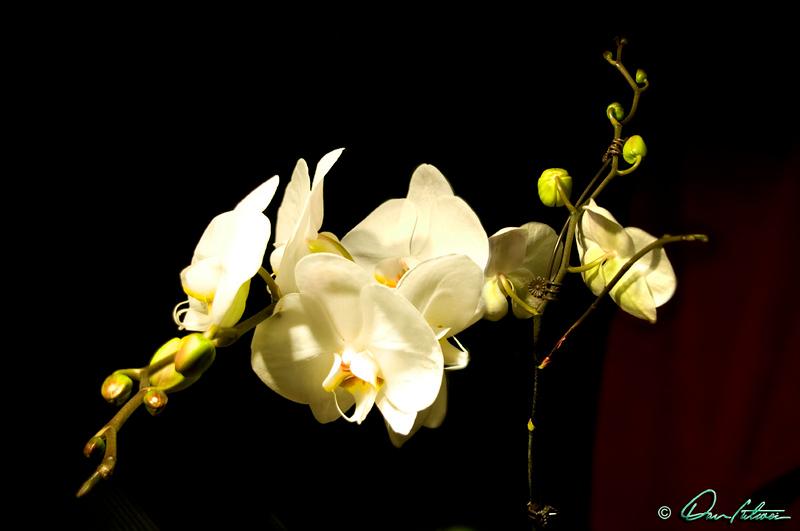 Orchid 01.jpg
