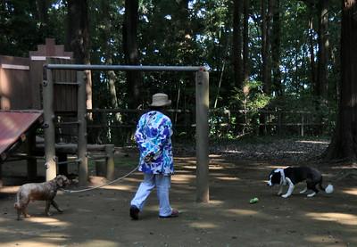 Dogs at Gohon Matsu Park - 31 July 2014