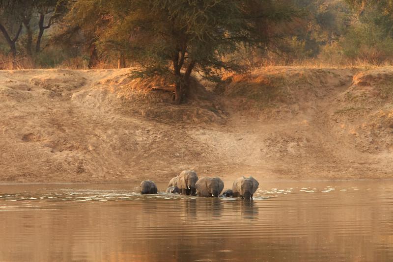 Elephant - 6327.jpg