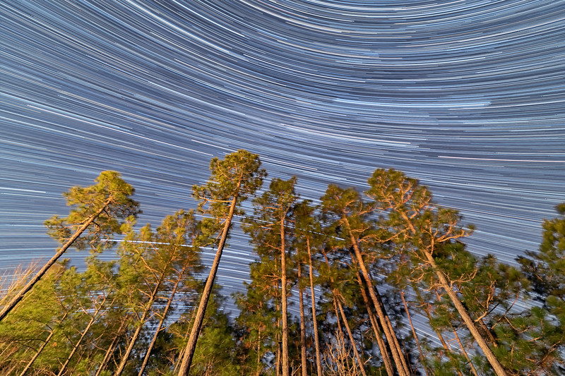 """""""Stars Through Southern Pines"""""""