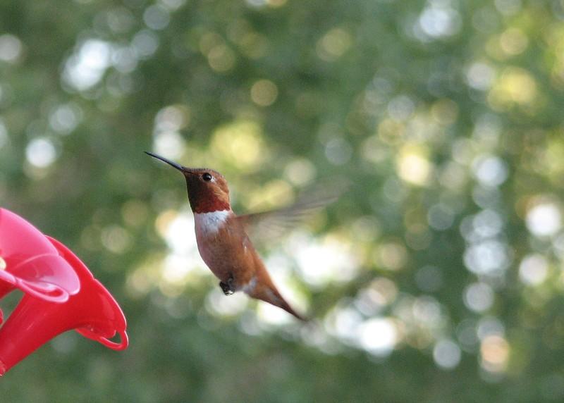 birds (159).jpg