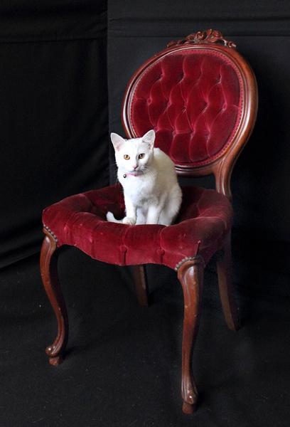 and one Photobombing Cat...