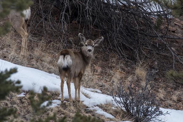 Wildlife 3 March