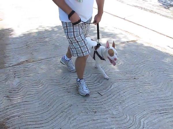 Dog Park 2.mp4
