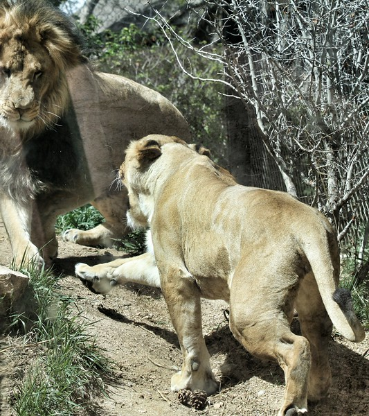 Cheyenne Mtn Zoo (179).jpg