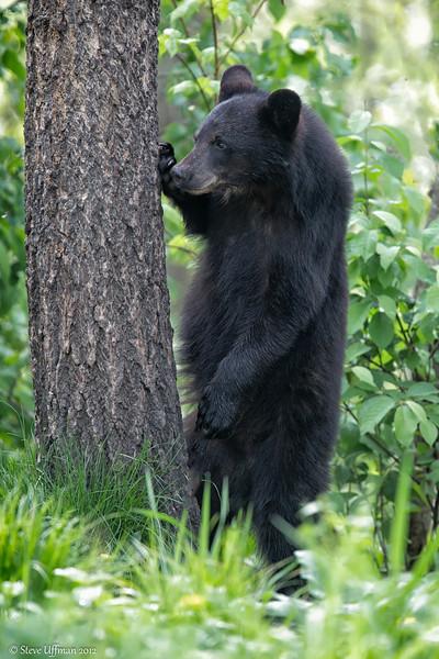 20120519-_Q2C6077Black_Bears-Edit-2.jpg