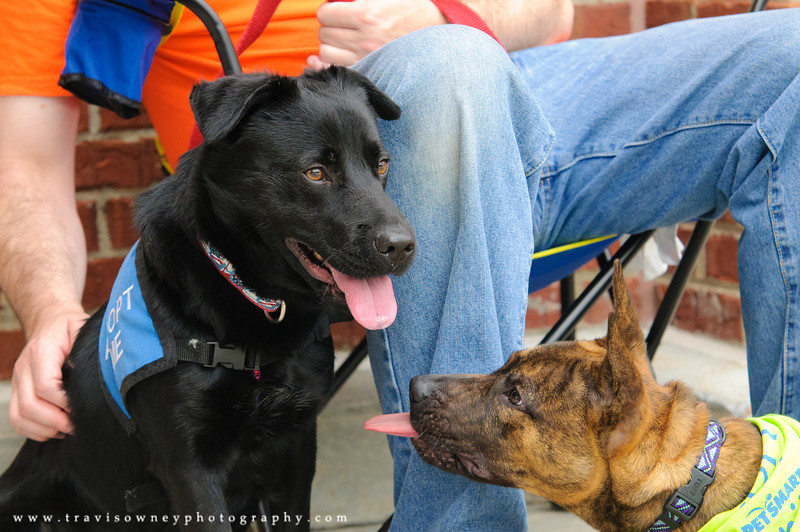 20110514 PetSmart Adoption Event-59.jpg
