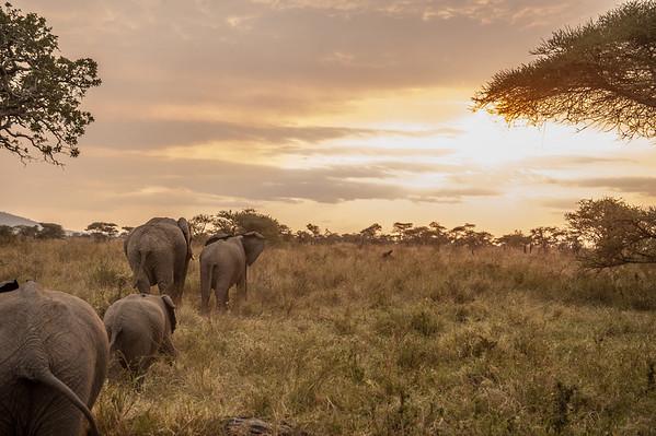 Serengeti (Jul 16)