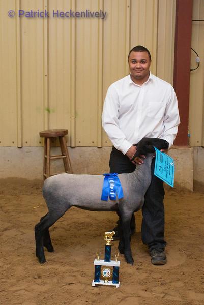 2010-09-27 Sheep 1200-1300