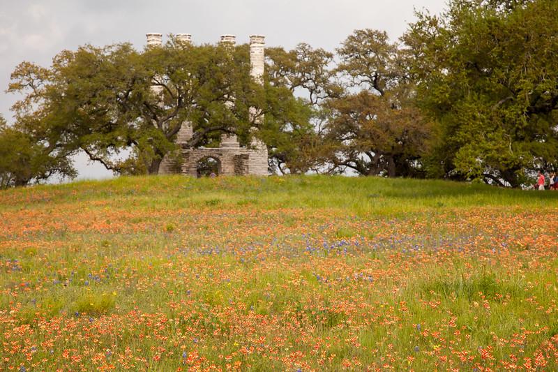 2015_4_3 Texas Wildflowers-8090.jpg