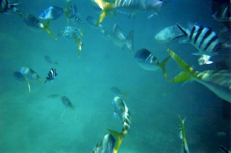fish_5.jpg