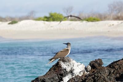 Galapagos Islands (Archipelago de Colon), Ecuador