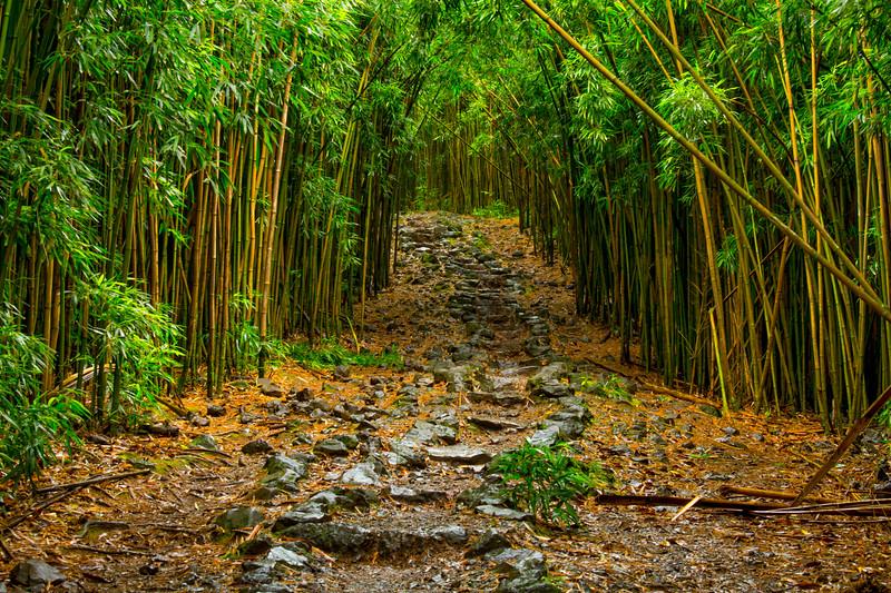 Trail to Waimoku Falls, Maui