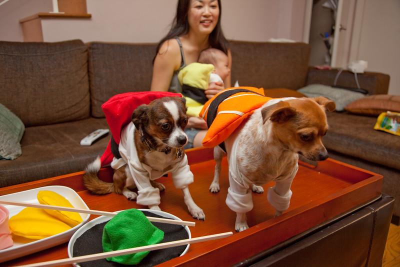 Dog-sushi-halloween-55.jpg