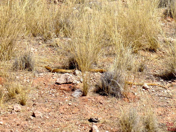 Road trip through South Namibia: snake