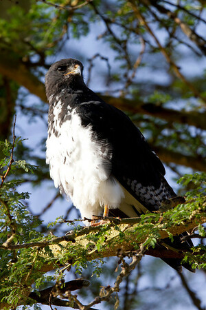 Kenya 2012 Birds