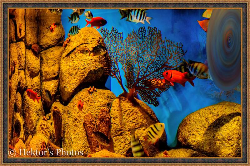 acquarium-4.jpg