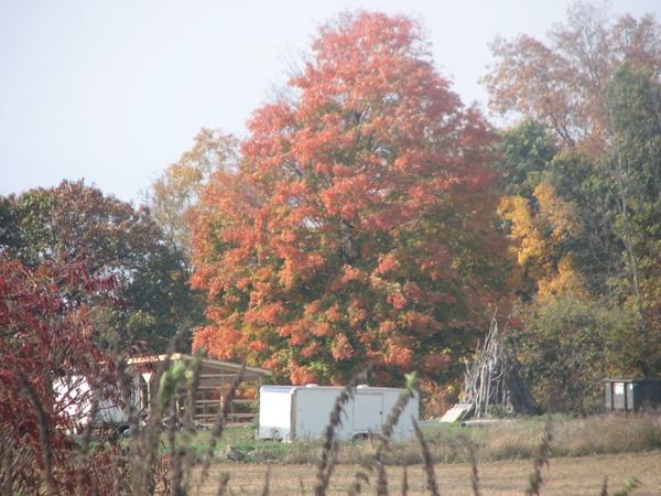 Fall pics 2008 043.jpg