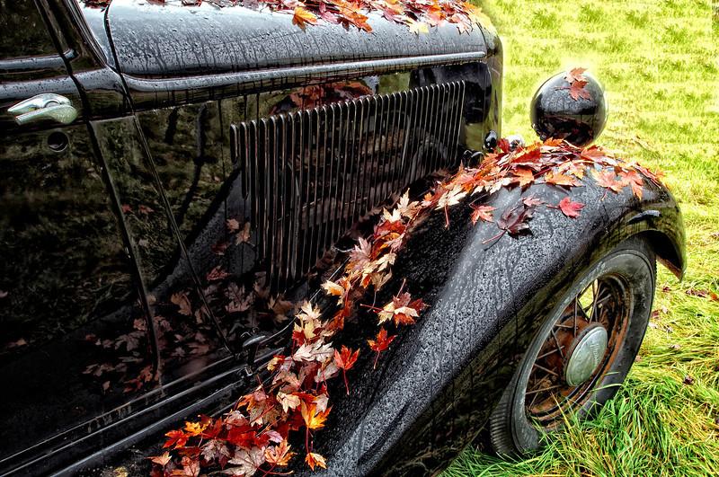 car with leafs .jpg