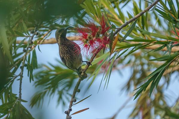 Birds of Greater Kruger