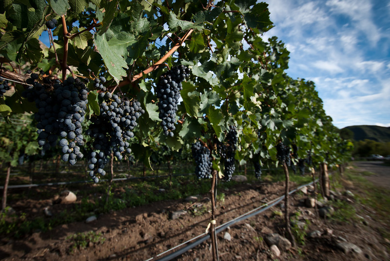 Cafayate 201203 Amalaya Wine (4).jpg