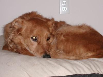 Michele's Dog; Finnigan