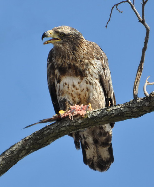 Nature Lunch at Reelfoot.jpg
