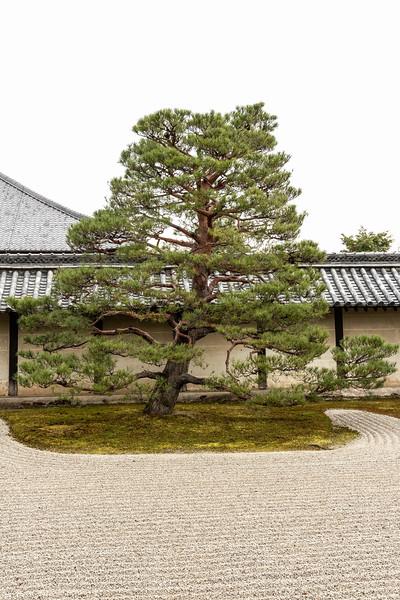 Kyoto12042018_224.jpg