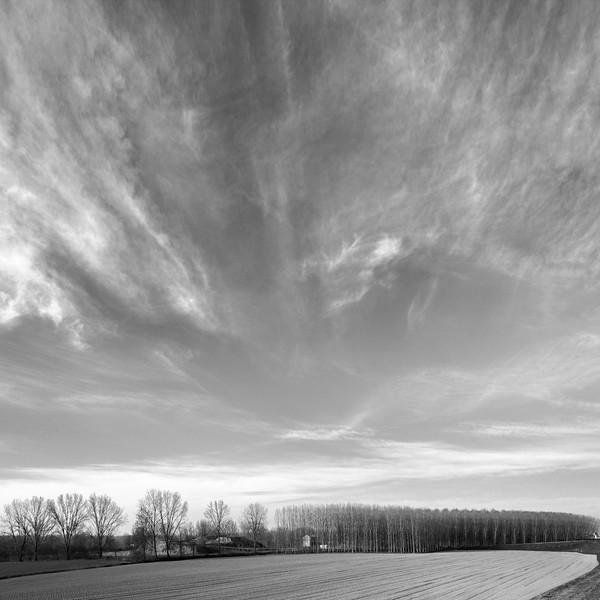 Poplars - Luzzara, Reggio Emilia, Italy - March 9, 2017