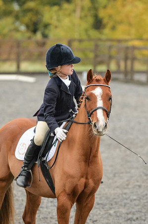 Lincomb EC Unaffiliated Dressage, 4th November 2018