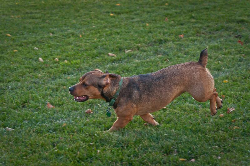 dog run26.jpg