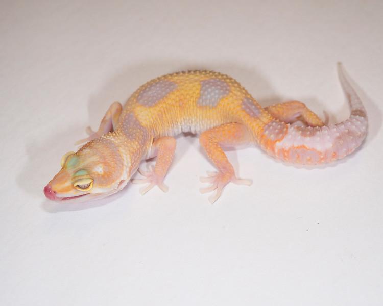 LG5115, $35, Tremper Albino, TSF, 19 grams