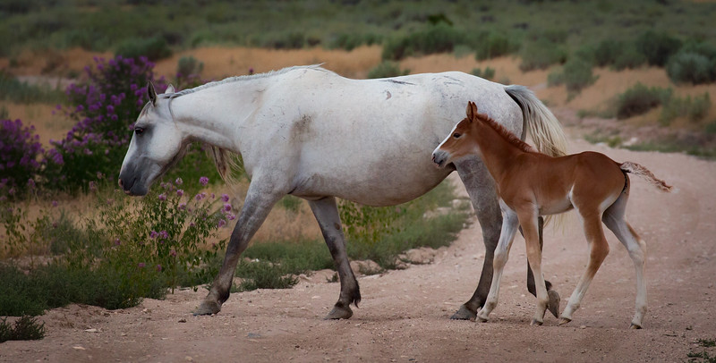 Prancing with Mom